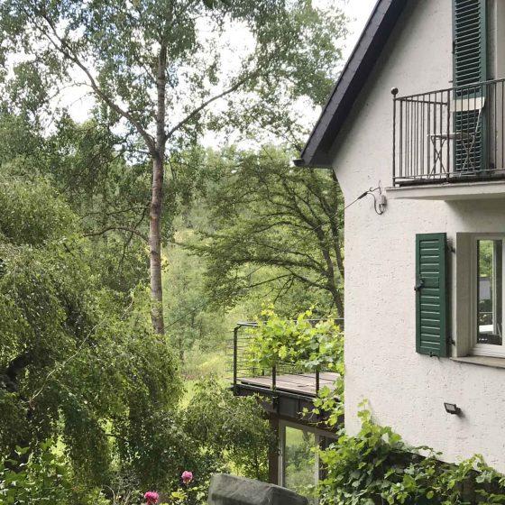 Birken, Tannen und andere Bäume am Ferienhaus.